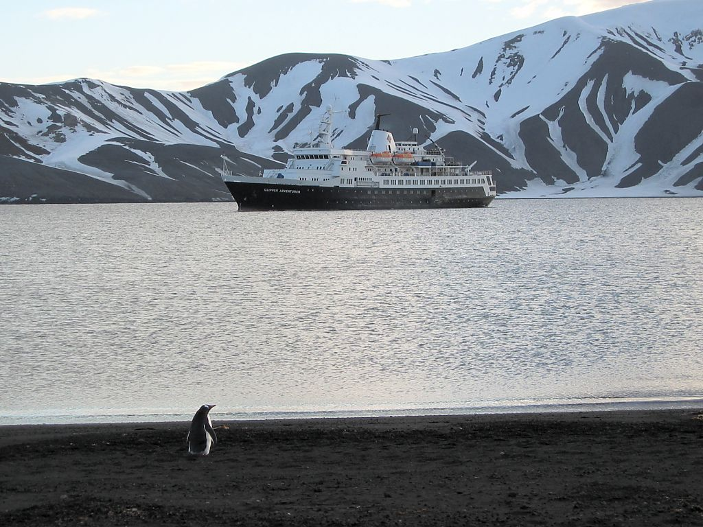 A lone gentoo patrols the beach inside the volcanic crater of Deception Island, late evening Dec. 5.  Click for next photo.