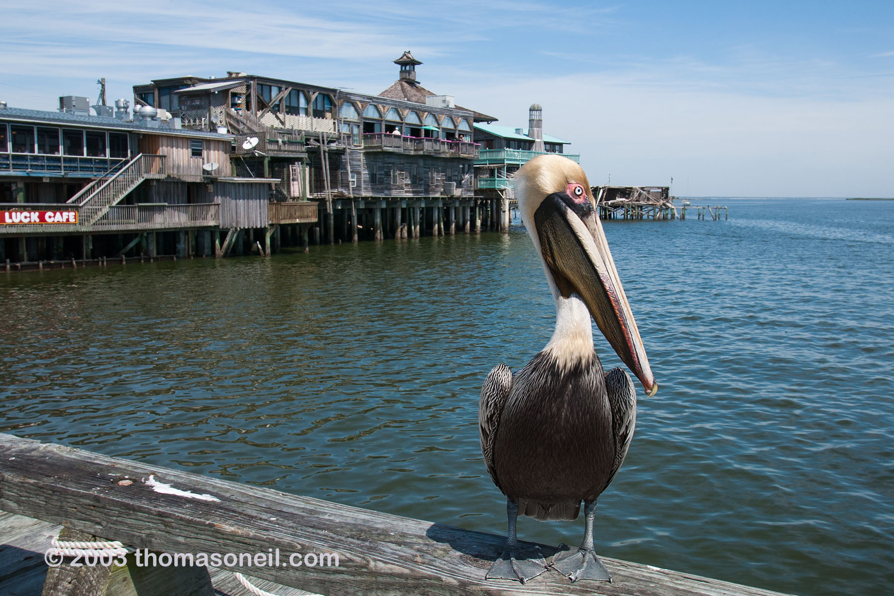 Cedar Key waterfront.  Click for next photo.