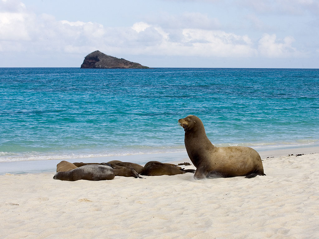 Sea lion, Gardner Bay, Espanola Island, Galapagos, Dec.12, 2004.  Click for next photo.