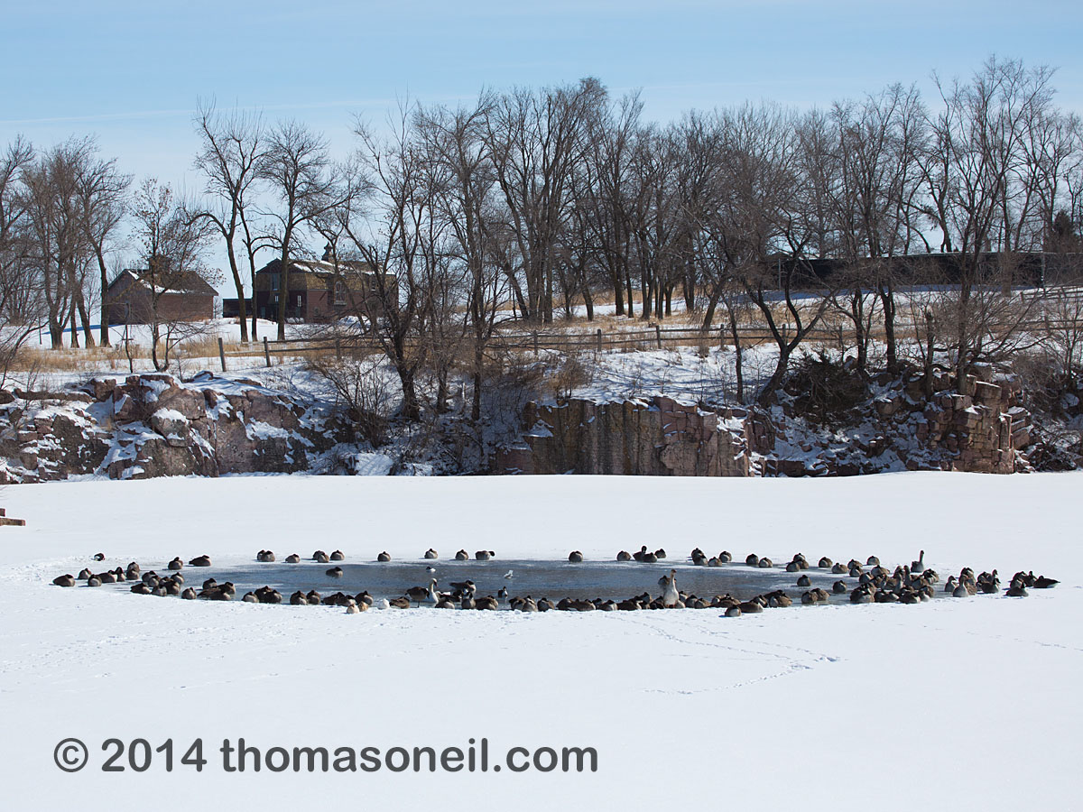 Ducks and geese huddle around a patch of open water, Arrowhead Park, Sioux Falls, SD, March 2, 2014.  The temperature was 0 degrees Fahrenheit.  Click for next photo.